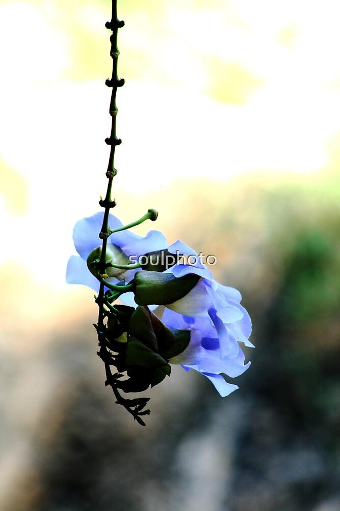 Lazy Flower by soulphoto