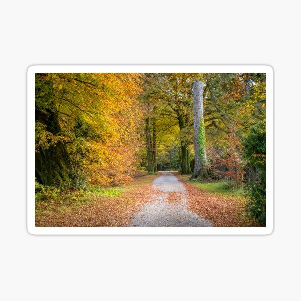 Autumnal Walkway Sticker
