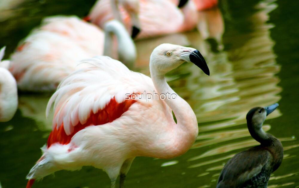 Duck-n-Go by soulphoto