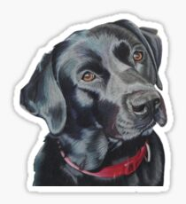 Indi the black Labrador Sticker