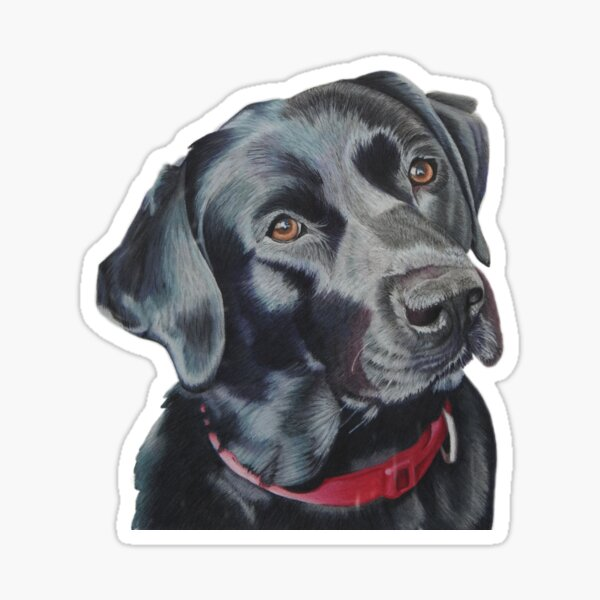 Indi the black Labrador Sticker