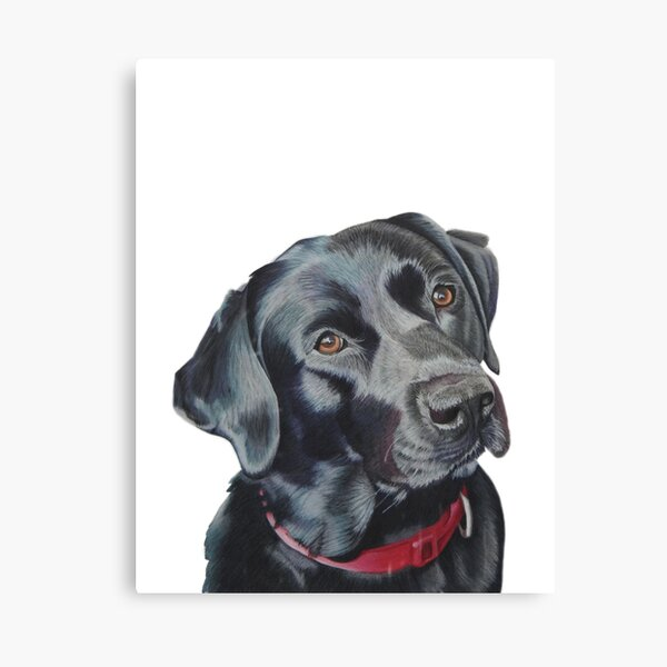 Indi the black Labrador Canvas Print