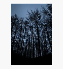 twilight, kirkhill forest Photographic Print