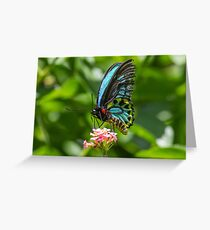 Richmond Birdwing Butterfly Greeting Card