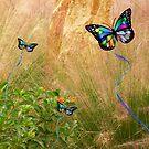 Butterfly Dreams by Rosalie Scanlon