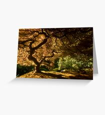 Shadows of Eden I Greeting Card