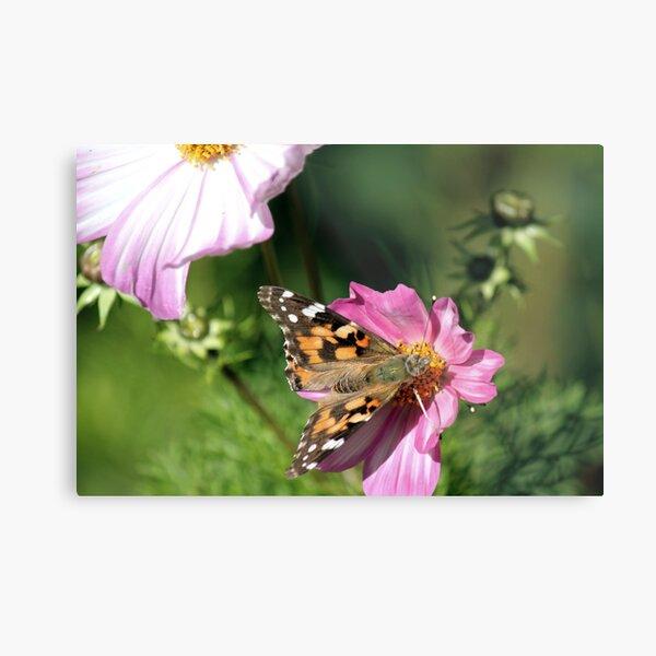 Butterfly in Flower Garden Metal Print