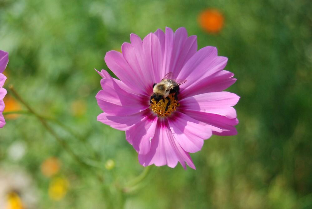 Buzz Buzz by lsmond