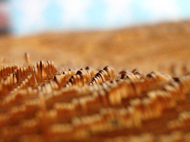 golden fields by falsehope