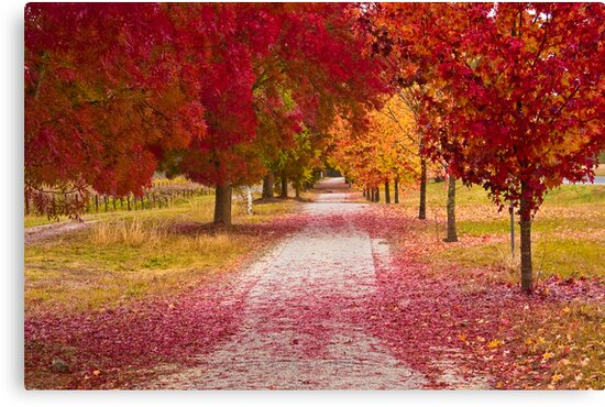 Bright Red Path  by Jared Revell