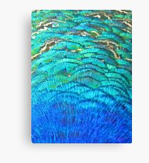 Peacock's feathers... Canvas Print