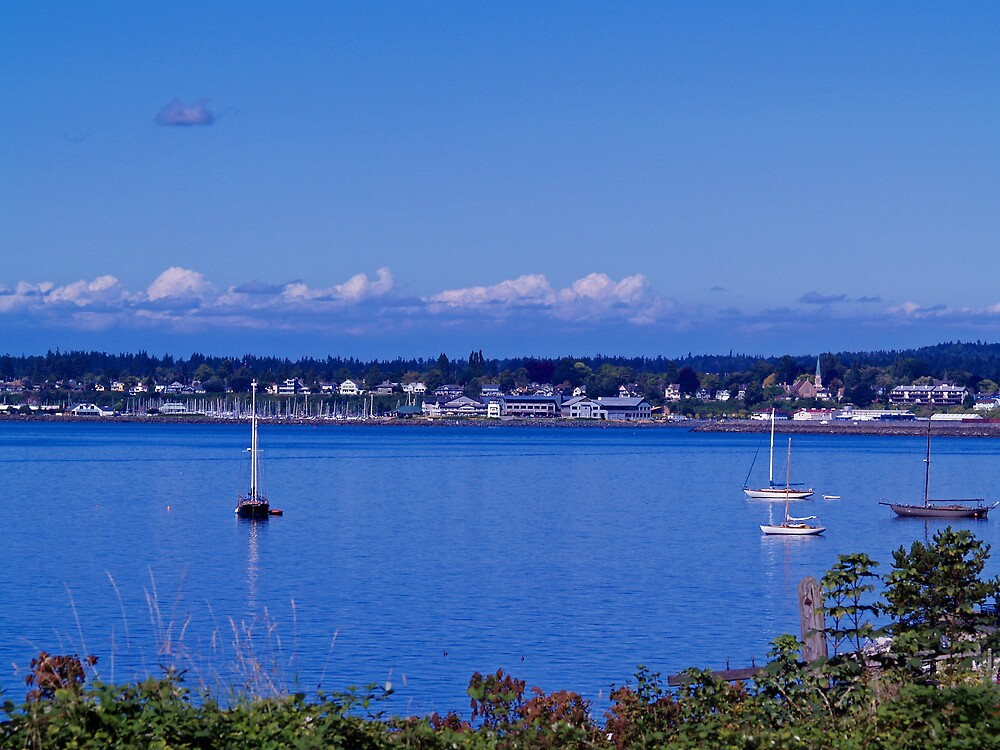 Sails on the Bay by Jack McCallum