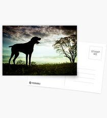 German Wirehaired Pointer Dog Postcards