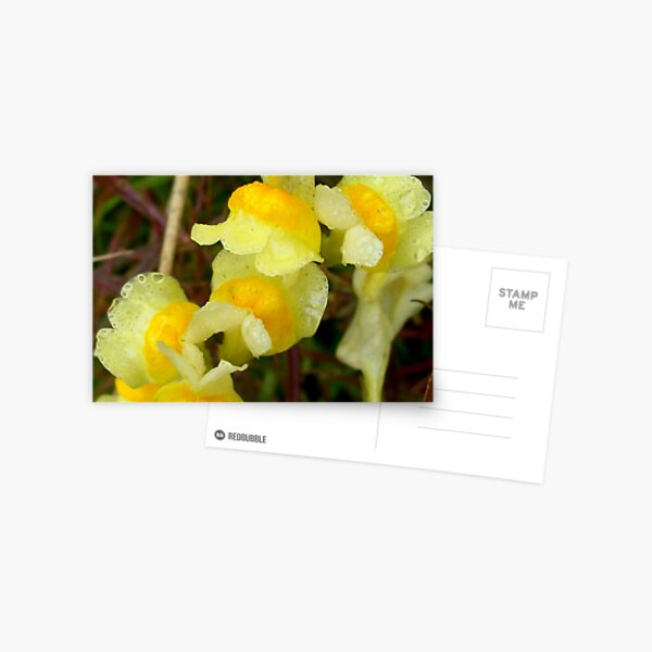 Yellow Rain Postcard
