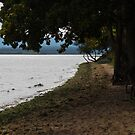 Trees on the Beach by Country  Pursuits