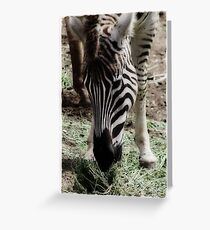 Hungry Hungry Zebra Greeting Card