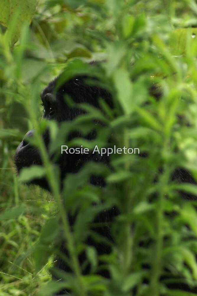 Hiding by Rosie Appleton