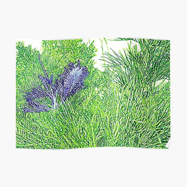 Green and Blue Grevillea Poster
