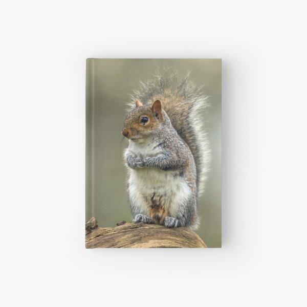 Wild Grey Squirrel Portrait Hardcover Journal