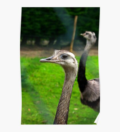 Who's Got A Long Neck Poster
