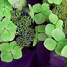 All Green by Trevor Kersley