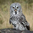 Great grey owl portrait by alan tunnicliffe