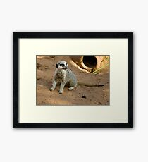 Throw it to me ...  Framed Print