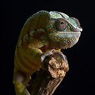 Panther chameleon portrait by alan tunnicliffe