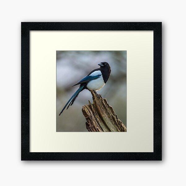 Magpie Portrait Framed Art Print
