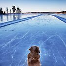 On ice by LadyFi