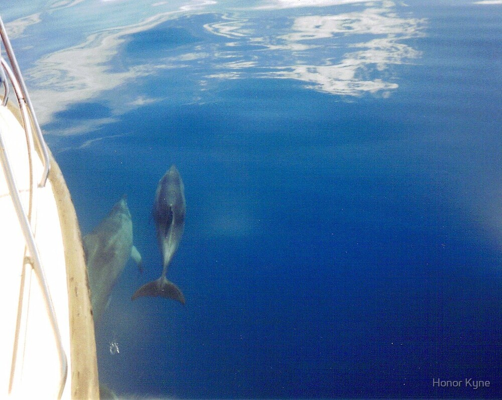 Dolphins Swimming with the boat :) by Honor Kyne