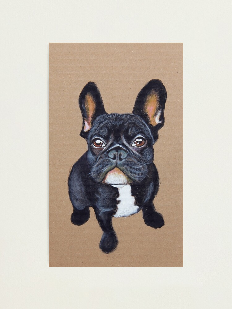 Alternate view of French Bulldog Photographic Print