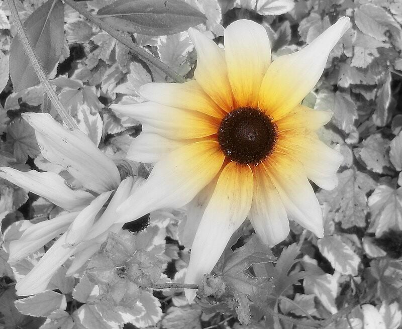 Daisy by Doreen