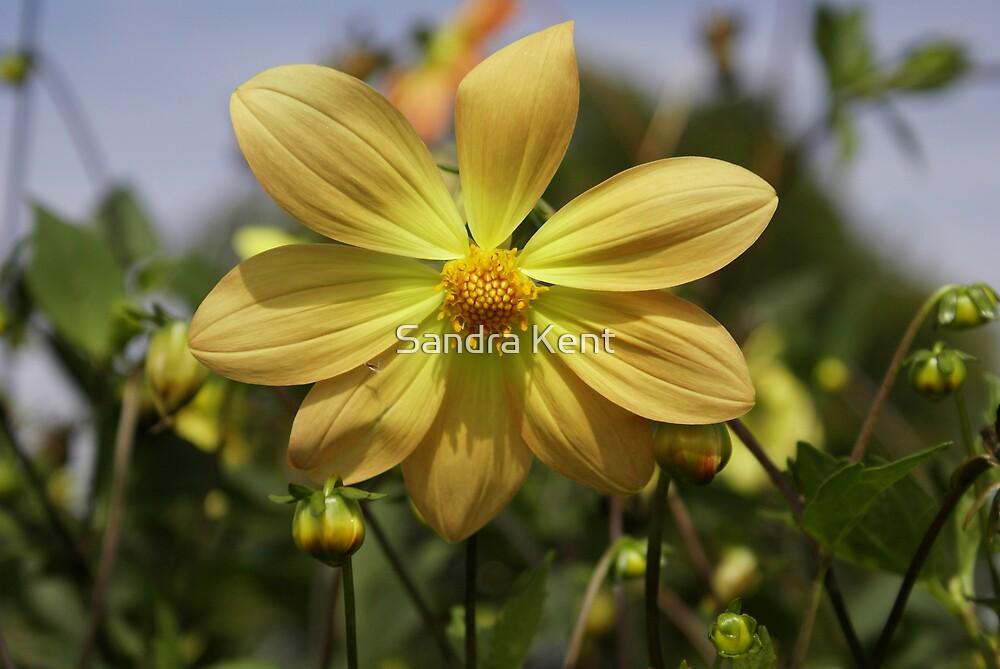 Yellow Flower by Sandra Kent