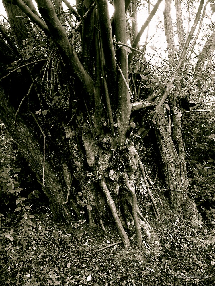 Tree trunk, Friday Woods by newbeltane