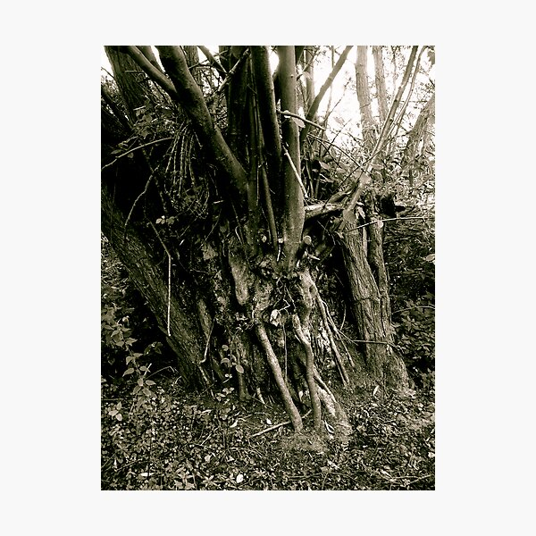 Tree trunk, Friday Woods Photographic Print
