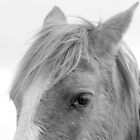 Eye Of The Horse Monochrome by DebraCox