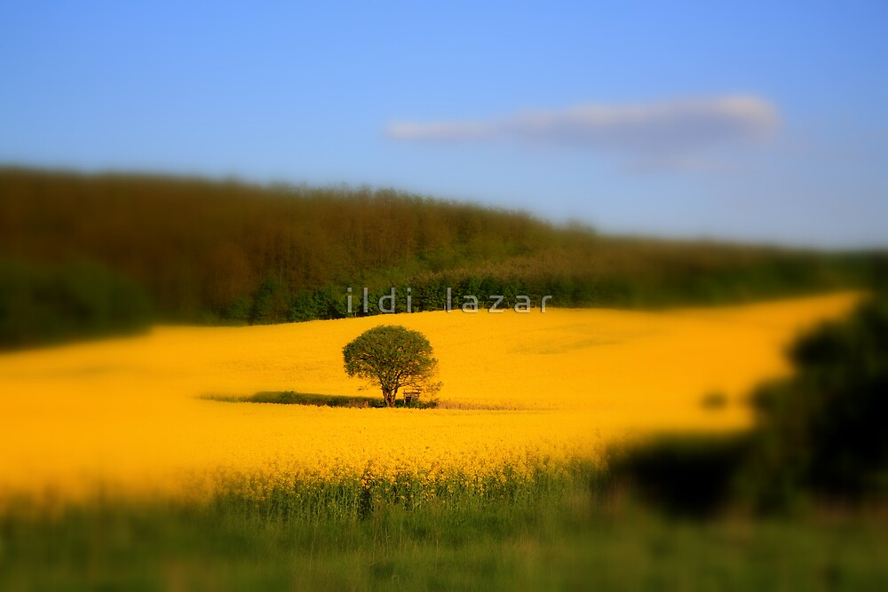 Lonely tree by i l d i    l a z a r