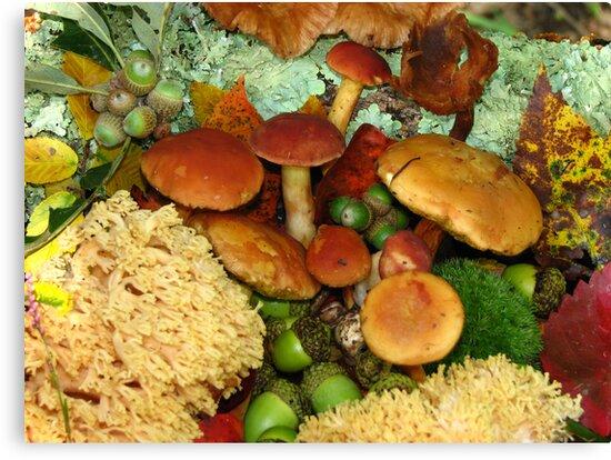 Forest Cornucopia by NatureGreeting Cards ©ccwri