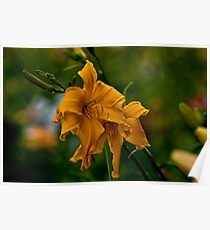 """""""Jersey Spider"""" Daylily Poster"""