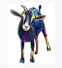 Gertie the Goat, Star of the Show Photographic Print