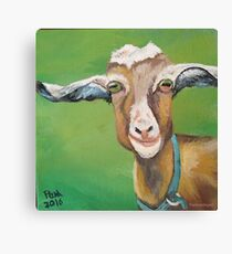 Cute goat Canvas Print