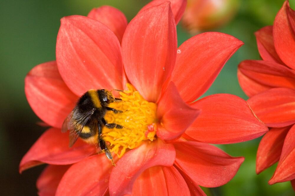 Bee by Karen Millard