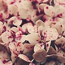 Hydrangea pink freckles  by Ingrid Beddoes