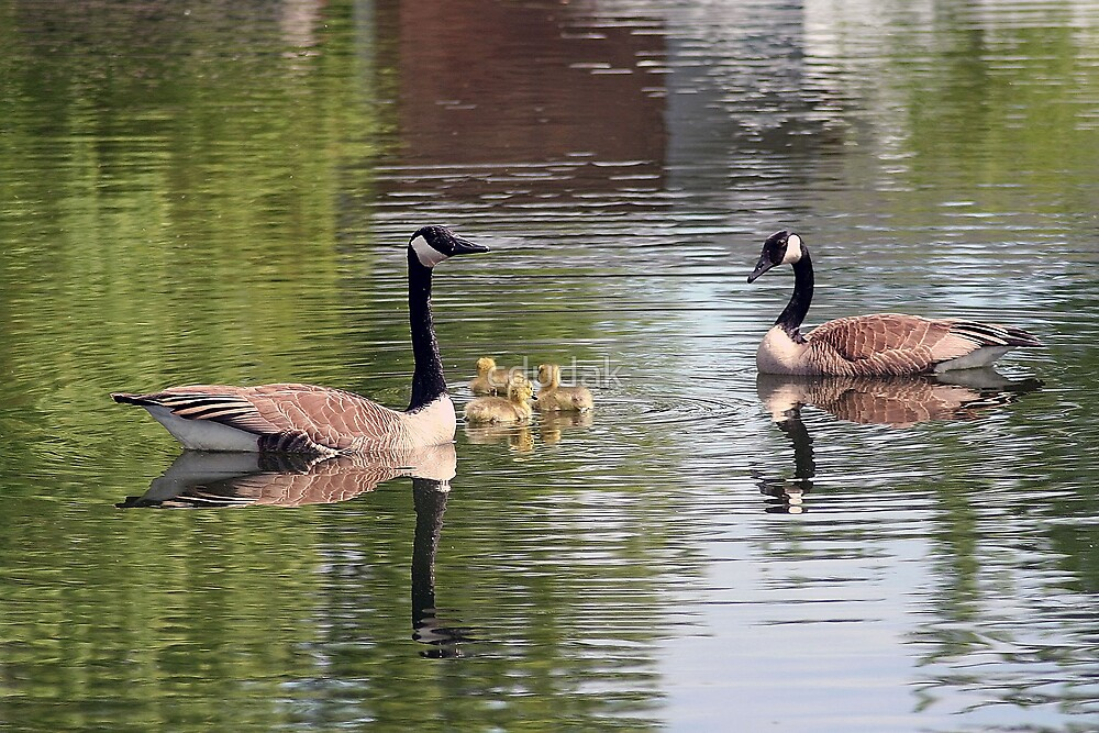 Family Swim by cdudak