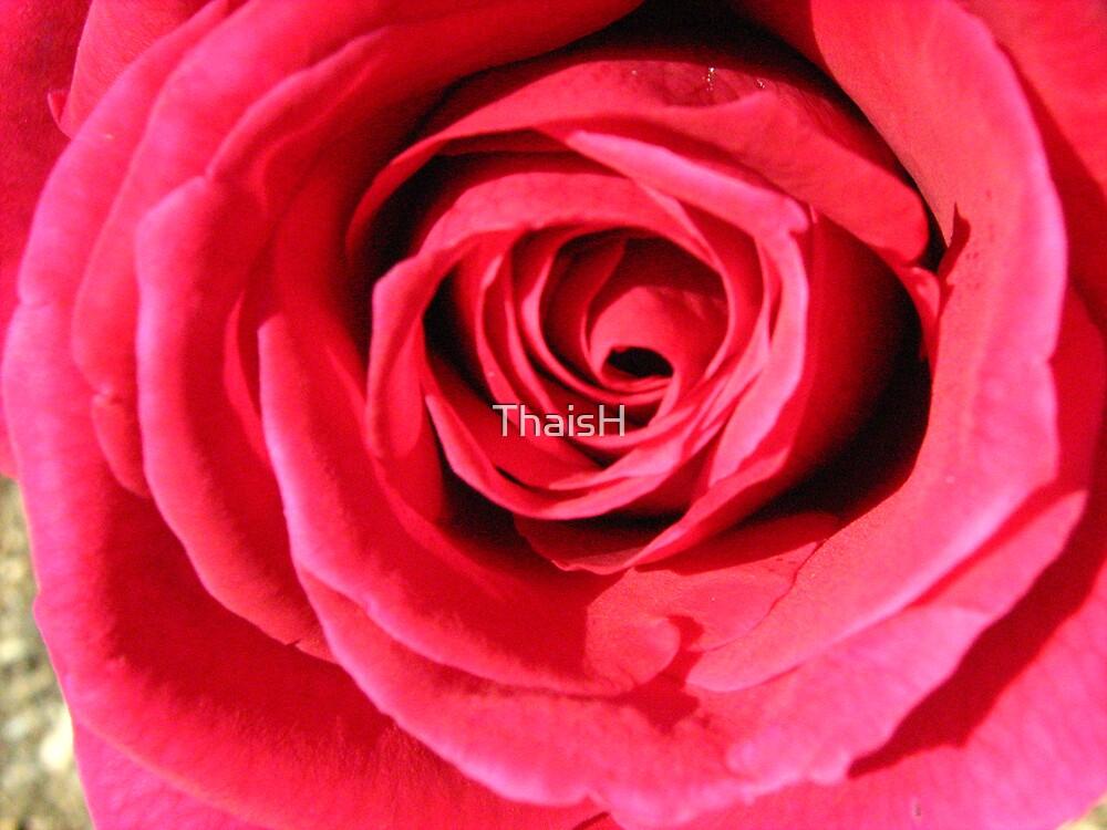 Velvet Rose by ThaisH