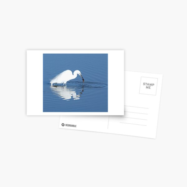 A Lucky Catch - egret fishing in France Postcard