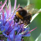 Pollen Inspector by lizdomett