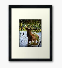 In the Willow... Framed Print