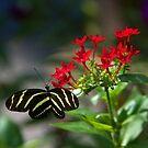Garden Visitor by Lisa Putman